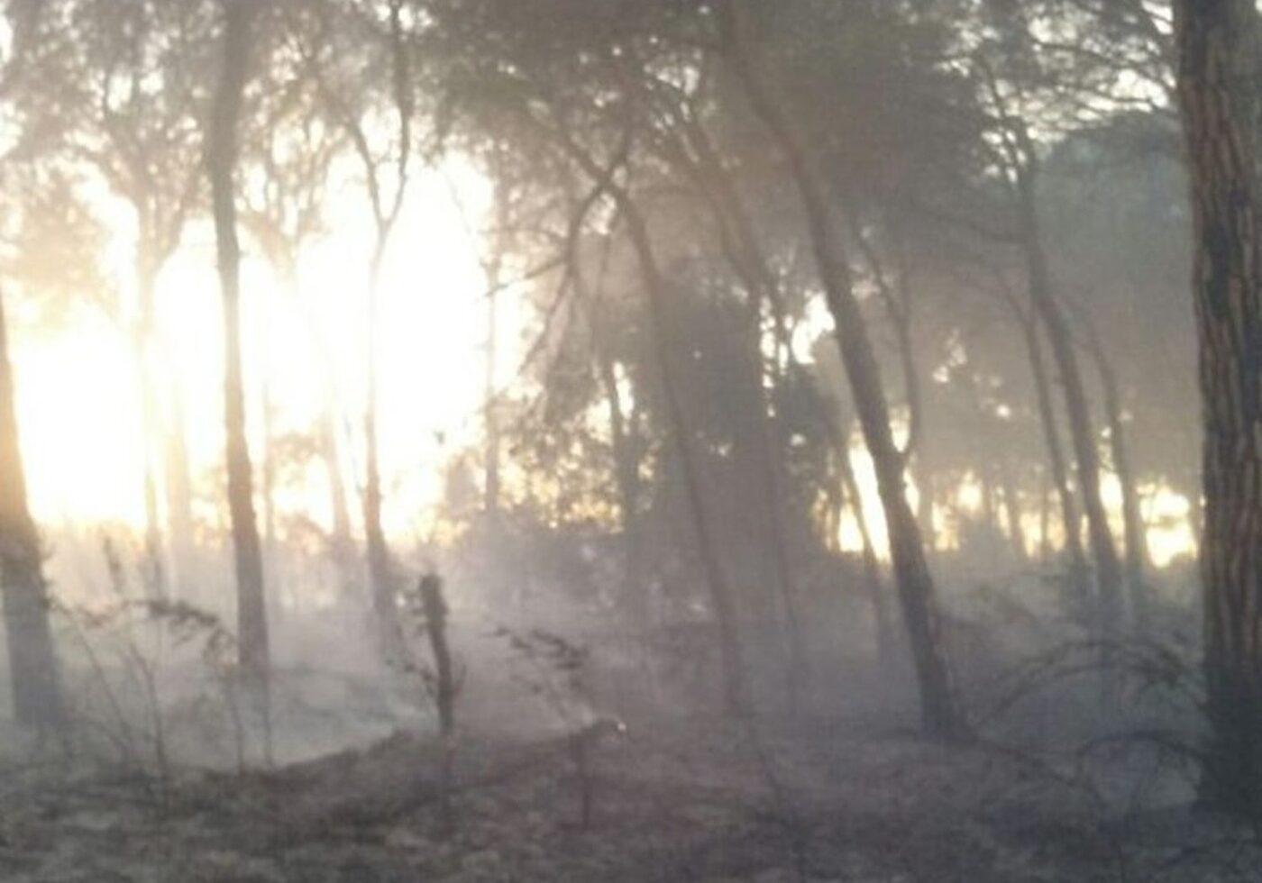 Una imatge de la zona afectada. Foto: Bombers de la Generalitat.